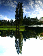 Reflection in the Park (Tony Worrall Foto) Tags: park uk autumn england sky color reflection tree green fall nature beauty wonderful season outside nice pond flickr colours natural northwest bright north stock sunny scene lancashire fave preston british tall colourful sunlit shimmer 2012 wetreflection haslampark greensih greencolour ashtononribble prestonian 2012tonyworrall