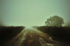 headlights (Alexey Tyudelekov) Tags: field saint fog lights silent petersburg headlights scare