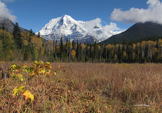 Mt. Robson.