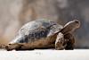 Tortoise (juliereynoldsphotography) Tags: turkey ruins tortoise letoon juliereynolds