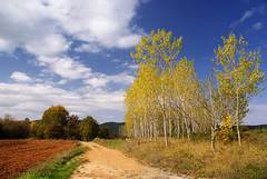 DSC05717 (nikolaos p.) Tags: autumn trees fall landscape outdoors landscapes fallcolors greece fields roads halkidiki