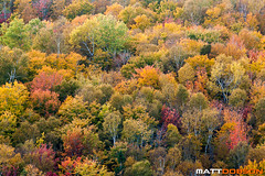 Autumn Colors (Matt Dobson Photograhy) Tags: trees color nature colors beautiful leaves rural season cherry landscape countryside leaf maple colorful poplar country scenic sumac foliage change birch beech bold