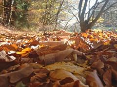 Mein schner Oktober (marion streich) Tags: autumn oktober nature leaves sunshine path laub herbst natur pilze bltter bume weg sonnenschein diejahreszeiten
