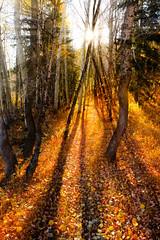 Fall Hiking (Scott Barlow) Tags: morning fall nature leaves forest utah nikon colorful uinta raw nef hiking hike skiresort sunburst sundance d800 nikkorafs1635mmf4gedvr