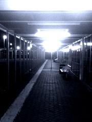 306/366: The path at night!