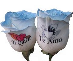 Rosa azul tatuada adicional a pedido ok (Graficflower) Tags: rosas azules