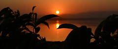 Hide and seek (Haseeb K) Tags: pakistan sunset mountains reflection water leaves silhouette river evening getty punjab shrubs sindh indus