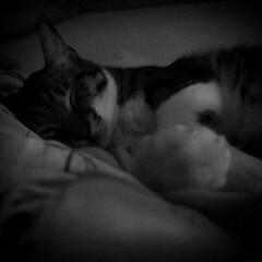 (Nicholas  H) Tags: pet white black night cat boot sleep room fat tabby pussy 寵物 貓 寵物攝影 kamiu