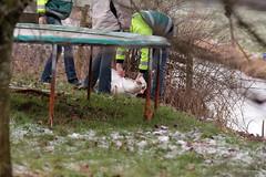 IMG_0348 (tinehendriks) Tags: ambulance zwaan rottevalle gewond zwanen ambu dierenambulance dierenambu