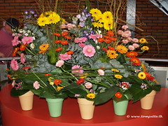 Attractive assortment of Gerberas at Keukenhof - 0639 (HereIsTom) Tags: show travel flowers flower holland netherlands dutch one 1 europe view you nederland olympus thank gerbera views million keukenhof webshots e500 miljoen