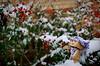 danbo_105 (iskandarbaik) Tags: park uk winter england white snow cold cute home forest bristol toy photography woods bokeh outdoor manga cardboard flakes yotsuba danbo danbooru revoltech danboard cardbo danboru