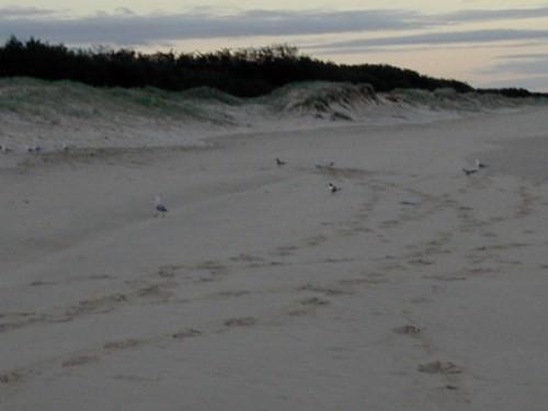 Beach Gold Coast - 21