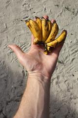 Lady Finger Bananas (Albert Freeman) Tags: travel nature lady island hand finger small bananas malaysia perhentian pulau terengganu 2012 kecil ladyfinger kualabesut