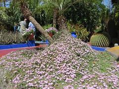 Marrakesh Majorelle_9904 (JespervdBerg) Tags: holiday spring 2016 africa northafrican tamazight amazigh arab arabic moroccanstyle moroccan morocco maroc marocain marokkaans marokko marrakech marrakesh majorelle