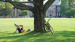 031crpshfwlacon (citatus) Tags: man bicycle rider resting lawn tree university college toronto canada convocation hall simcoe summer afternoon 2016 pentax k3 ii