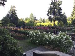 International Rose Test Garden (hey_deeps) Tags: oregon portland burns 2016 washingtonpark roses garden internationalrosetestgarden