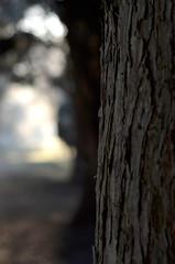 Bark Texture (Thomas Harkins Productions) Tags: bark texture
