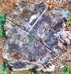(Luca3803) Tags: wood legno nature natura tronco log albero tree
