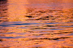 Reflet sur la Garonne, Toulouse (lyli12) Tags: eau reflet couleur toulouse garonne rivière coucherdesoleil nikon d7000