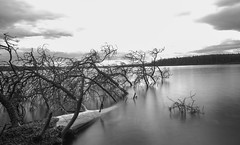 Musreau Lake tree (wrighteye) Tags: tree longexposure canon water ndfilter landscape musreau alberta branches blackandwhite canada lens slow shutter