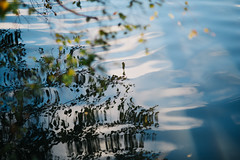 reflections (JuNu_photography) Tags: wave water surface waves autumn fall leaves leaf reflection reflecting reflected twisted art nature artofnature sigma85mmf14exdghsm 85mm f14 5d3 5d mark iii 5dmarkiii tree branch branches photooftheday seasons zen photography finland espoo