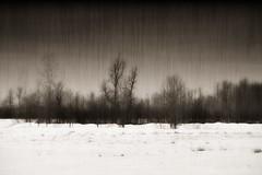 Lonely Winter (Jason OC) Tags: portfolio winter zfinished