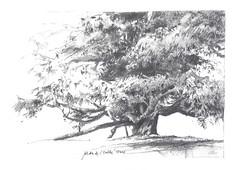Carnet des arbres (StphanePrvot) Tags: arbres tours cdre