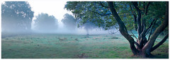 Peaceful morning atmosphere (na_photographs) Tags: nebel dunst mist tree meadow heath wiese nature natur baum