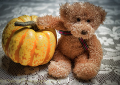 What? (HTBT) (13skies) Tags: teddybeartuesday gourd fall colour season fun playing teasing kidding heard names happyteddybeartuesday bear