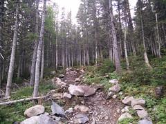 015 - Parc national de la Gaspsie : Mont Xalibu (Arfphandal Forfal Forphan) Tags: trip qubec gaspsie forest tree arbre fort nature water eau park landscape