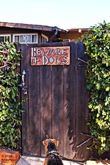 But...Why..? (Art By Pem Photography: Tao Of The Wandering Eye) Tags: fineartphotography canon canoneosrebelsl1 eos sl1 dog door gate fence sign airedale airedaleterrier terrier pets wood wooden whimsical signs bewareofdogs warning shadows light shrubbery usa