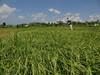DSC05324.jpg (J0celyn79) Tags: asie bali indonésie karangasem id