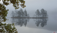 Misty morning... (bent inge) Tags: autumn fall water yellow norway misty pine mirror norge aspen dis furu gul vann fjell 2012 hst tke morningmist osp y hjelmeland ryfylke vannspeil morgendis bentingeask askphoto hetlandsvatnet