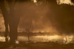 Dawn at the borehole (Andy Burton Oz) Tags: monochrome australia steam qld queensland 2012 cunnamulla bowra warrego afsvrzoomnikkor70300mmf4556gifed andyburton borewater bowrastation southwestqueensland nikond7000 bowrasanctuary aperture341 andyburtonsbushtours