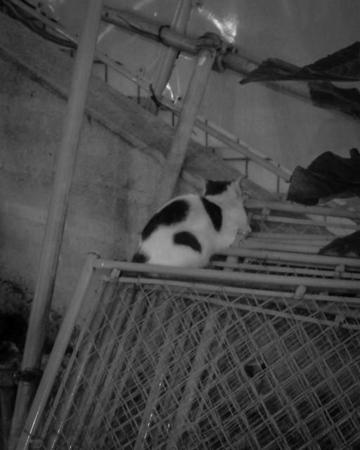 Today's Cat@2012-10-17