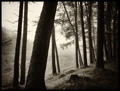 The Trees are Whispering (Feldore) Tags: wood morning trees ireland irish mist misty fog forest foggy ethereal northern mchugh gortin sperrins feldore