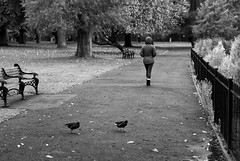 Coot Crossing (Cris Rose) Tags: park leica trees blackandwhite bird girl rain animal zeiss bench 50mm bokeh coat sharp m8 f2 railing coot planar
