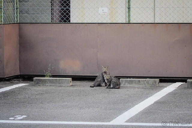 Today's Cat@2012-10-23