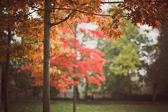 Rowntree Park (MMortAH) Tags: park york autumn trees red fall 50mm oak nikon yorkshire 14 north nikkor afs rowntreepark d90