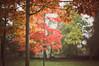 Rowntree Park (MMortAH) Tags: park york autumn trees red fall 50mm oak nikon yorkshire 14 north nikkor afs rowntreepark d90