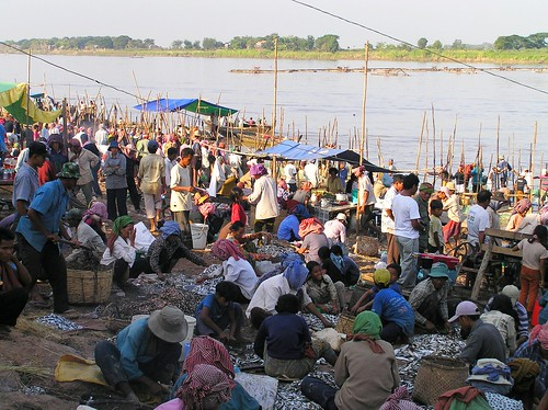 Fish market in Cambodia. Photo by A. Ribier, 2004.