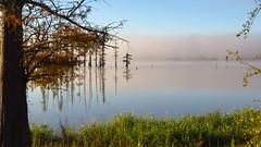 Foggy morning (Focus-ur-Life) Tags: lake tree water fog cypress