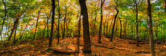 Early Autumn Forest Pano HDR (Painted Light Studio) Tags: autumn trees light panorama usa sun green fall nature leaves forest landscape photography woods angle image pentax earth pano wide sigma panoramic photograph bark trunk canopy 1020mm hdr 2012 k5 merged hugin photomatix wisconsinstatepark tonemapped wisconsinstatenaturalarea kohlbauer cadizsprings cadizspringsstaterecreationarea wisconsinstatenaturearea hardpancom marckohlbauer