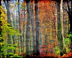 Forest Walk (Tobi_2008) Tags: autumn trees color nature alberi forest germany deutschland saxony herbst natur arbres sachsen tobi wald farbe bume allemagne germania diamondclassphotographer flickrdiamond platinumheartaward mygearandme mygearandmepremium