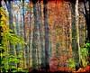 Forest Walk (Tobi_2008) Tags: autumn trees color nature alberi forest germany deutschland saxony herbst natur arbres sachsen tobi wald farbe bäume allemagne germania diamondclassphotographer flickrdiamond platinumheartaward mygearandme mygearandmepremium