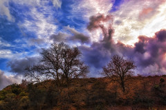 Trees at sunset (Theophilos) Tags: trees sunset sky nature grass clouds crete rethymno