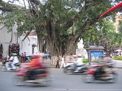 Hanoi bikes (mbphillips) Tags: fareast southeastasia 越南 ベトナム 베트남 asia アジア 아시아 亚洲 亞洲 mbphillips canonixus400 geotagged photojournalism photojournalist hanoi capital 首都 수도 travel việtnam vietnam vietnamese