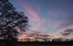 130104_365_Good Morning (Damien Walmsley) Tags: park tree sunrise tpe knowle knowlepark jobsclose