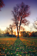 Autumn At Read Park (Zagros.os) Tags: park autumn sunset shadow sun tree fall leaves photography filter gnu