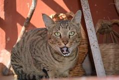 Kitty (Ishaan IZN) Tags: camera lens nikon flash kitty kit 1855mm on d5200